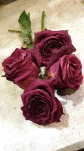 roses-581401_1280